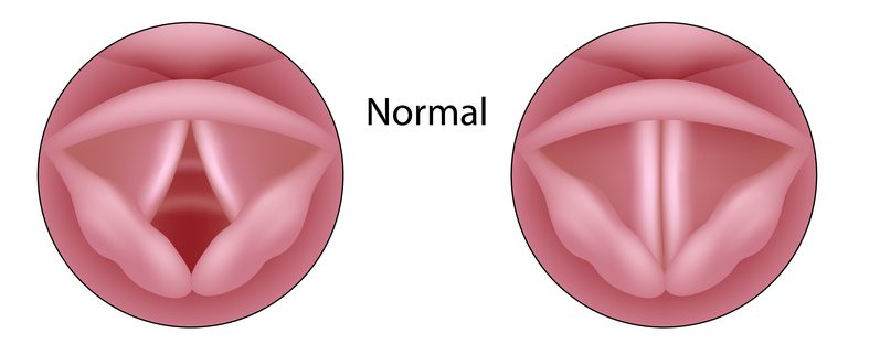 Vocal folds in the open and closed position
